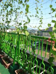 パワーリーフのグリーンカーテン